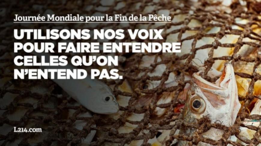 Lyon : un happening de L214 ce samedi à l'occasion de la journée mondiale pour la fin de la pêche