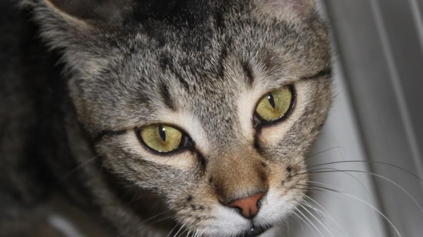 Près de Lyon : un chat coincé dans un immeuble, à cinq jours de sa destruction