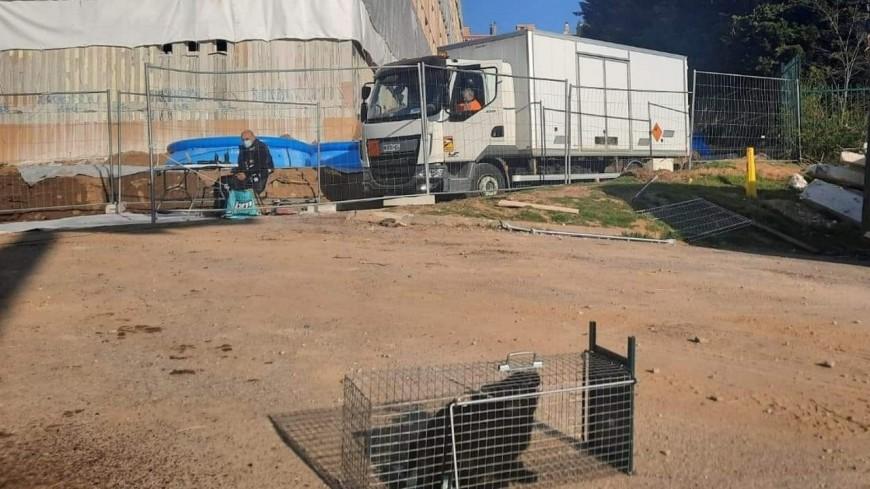 Près de Lyon : sauvetage du chat coincé dans un immeuble, à quatre jours de sa destruction