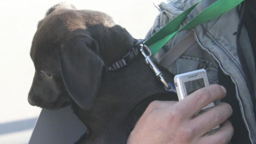 La Métropole de Lyon lance une mission sur la condition animale