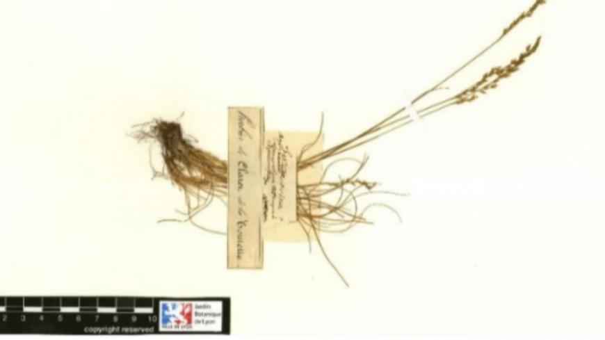 Lyon : découverte d'un herbier signé par Jean-Jacques Rousseau