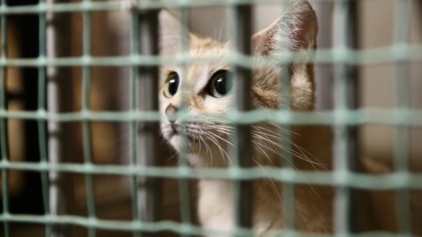 Lyon : action prévue pour la fermeture du zoo de la Tête d'Or