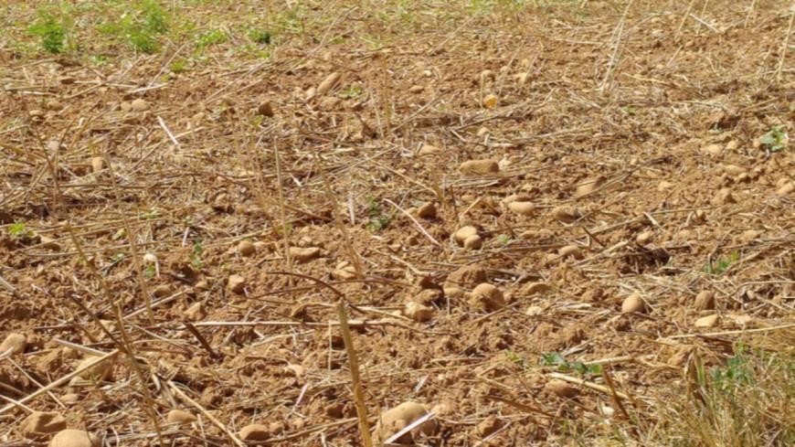 Sécheresse : l'état de catastrophe naturelle reconnu dans 38 communes du Rhône