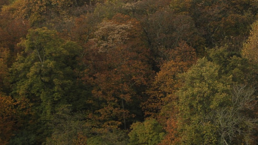 """Lyon : une """"action-éclair"""" de Greenpeace contre la déforestation ce samedi"""