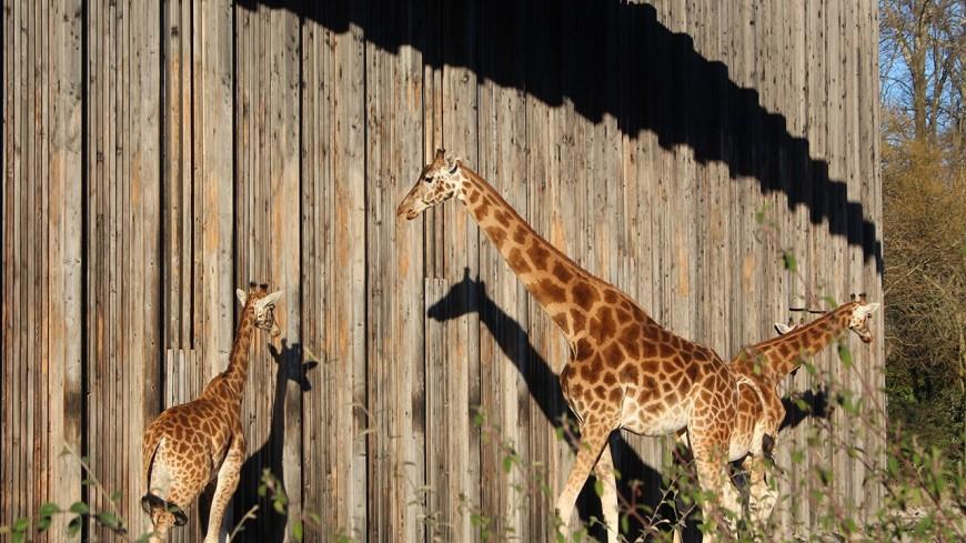 Lyon : le petit train du parc de la Tête d'Or restera désormais loin des animaux