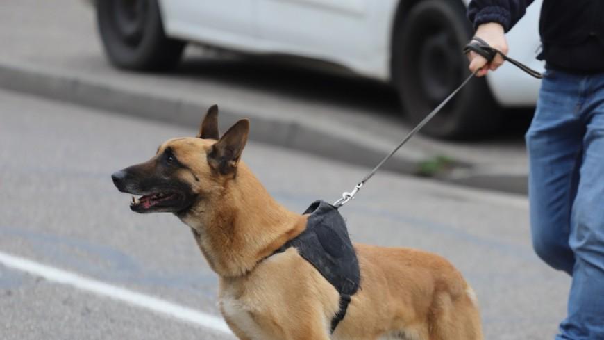 Près de Lyon : le chien policier débusque et mord le cambrioleur caché sous une couette
