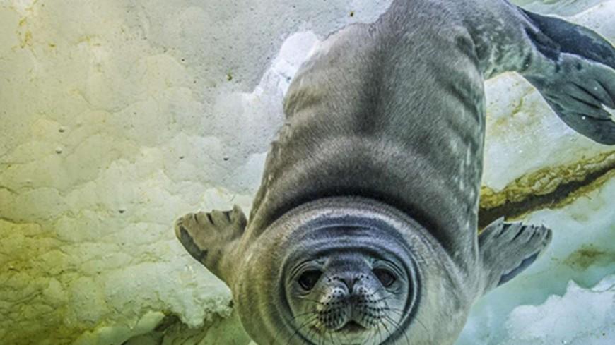 Changement climatique : des photos sur l'Hôtel de Ville de Lyon pour sensibiliser à la protection des pôles