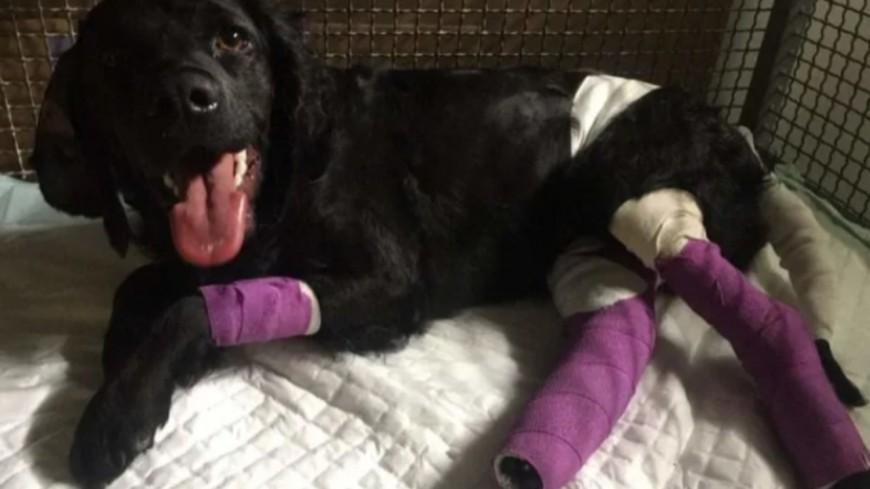 Près de Lyon : une cagnotte pour aider Roxy, une chienne miraculée après un accident de train