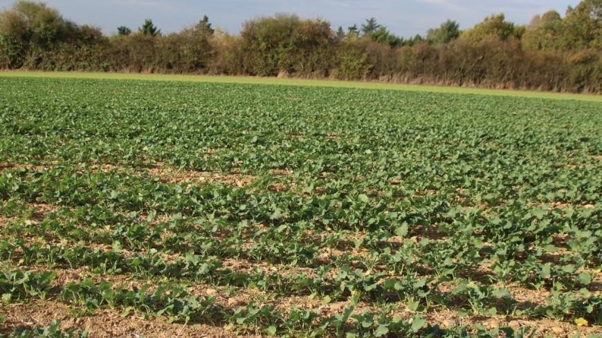 """La Métropole de Lyon sur le point de """"sacrifier 14 hectares de terres agricoles"""" pour un cimetière ?"""