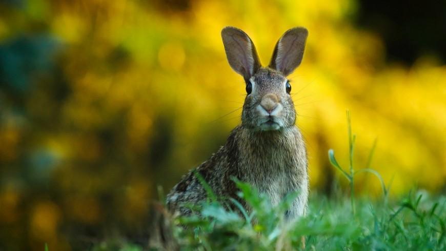 Villeurbanne : une maladie contagieuse à l'origine de la mort de lapins au parc de la Feyssine