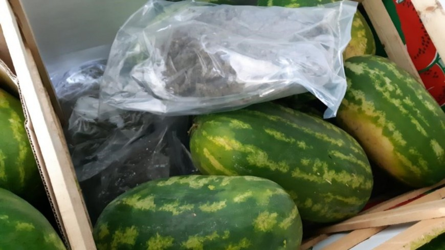 Les douanes de Lyon trouvent 400 kg d'herbe cachés dans des pastèques