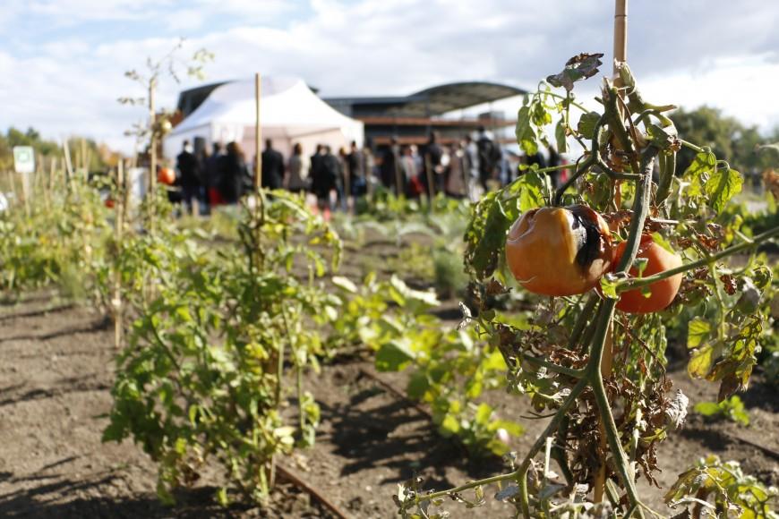 Des fruits et légumes anciens venus tout droit de Russie cultivés près de Lyon