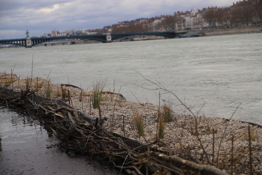Lyon : Gabiodiv' veut réimplanter la nature dans le Rhône - VIDEO