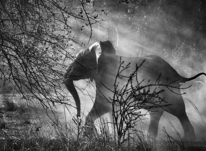 A Lyon, le photographe Sebastiao Salgado rend hommage à la Terre primitive
