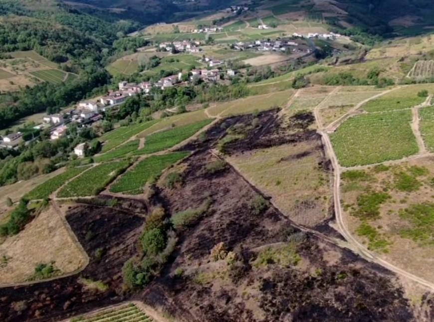Beaujolais : un important feu de végétation d'origine criminelle ?