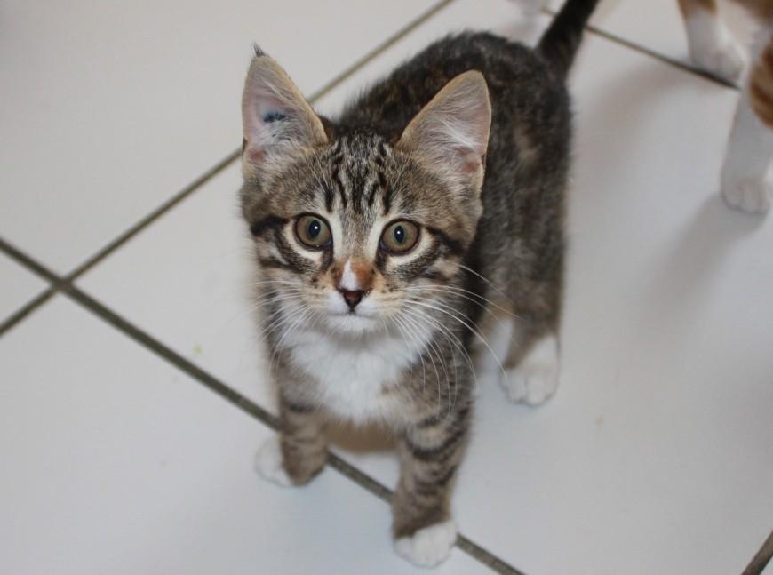 Rhône : la conductrice d'un bus TCL sauve la vie d'un chaton