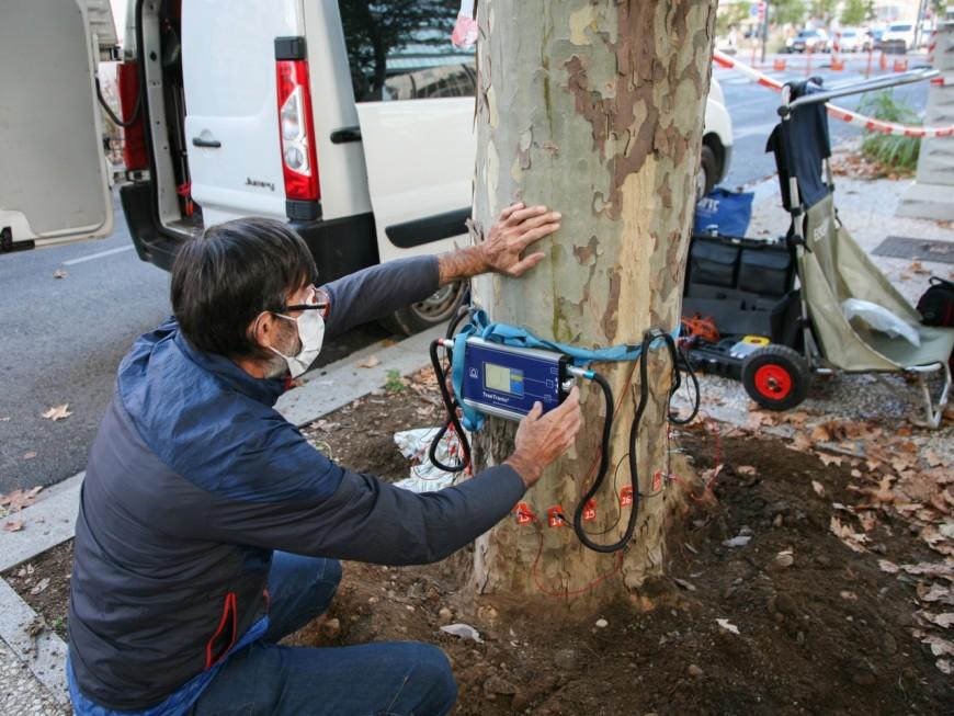 Lyon : après la chute d'un platane rue Garibaldi, la résistance des arbres testée