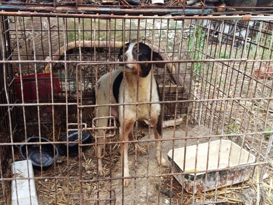 La SPA de Lyon lance un appel à la solidarité pour aider les chiens sauvés à Givors
