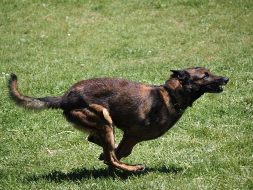 Ecully : un chien abandonné pendant trois jours dans une voiture