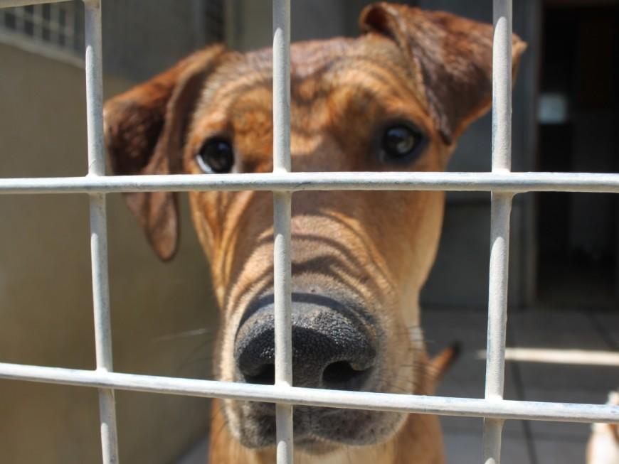 Villeurbanne : les cambrioleurs volent un chien et le maltraitent