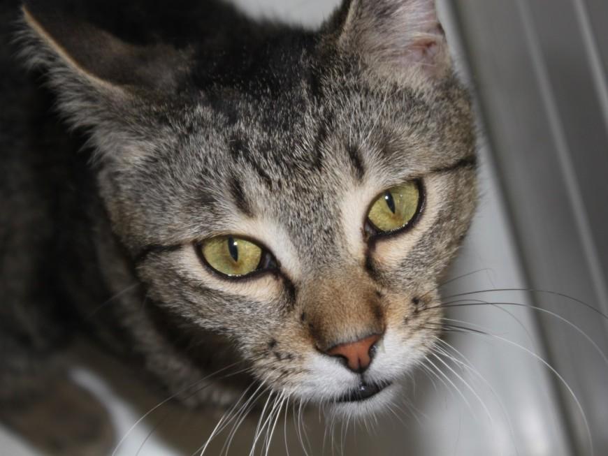 Victime de tirs de plombs, un chat euthanasié près de Lyon