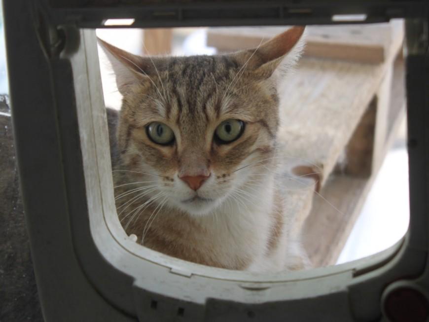 Bron : un rappel à la loi pour le chasseur qui a tué un chaton