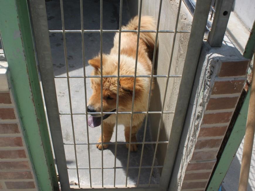 Adoptions d'animaux stoppées : 36 personnalités dont deux Lyonnais écrivent à Emmanuel Macron