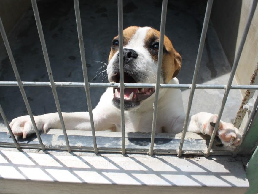 Rhône : elle quitte son appartement mais y laisse ses animaux mourir de faim