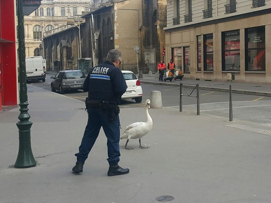 Le Cygne et le Policier