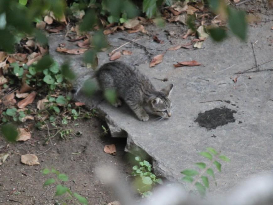 Un chaton abattu à la carabine près de Lyon