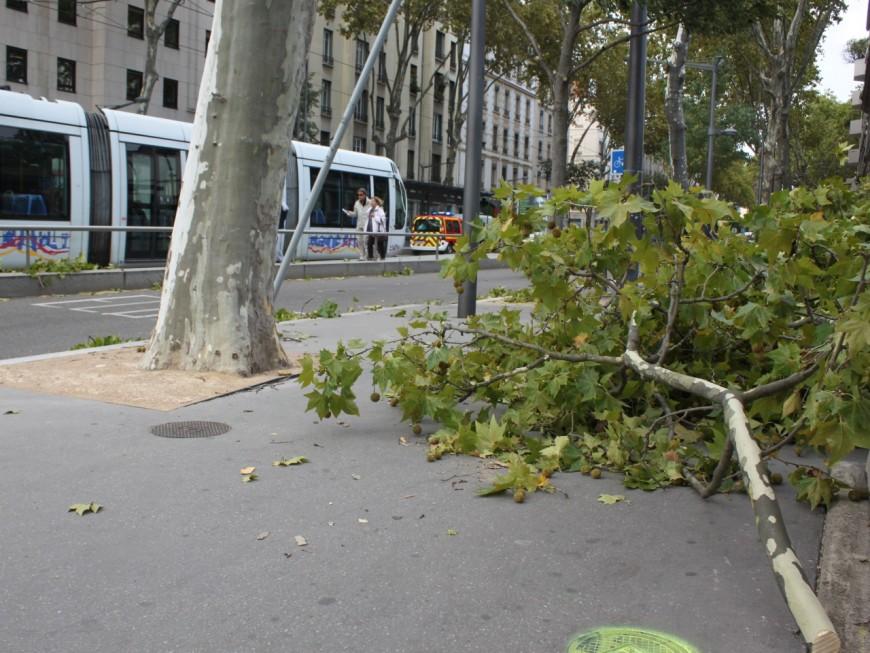 Près de 300 interventions dans le Rhône à cause du vent