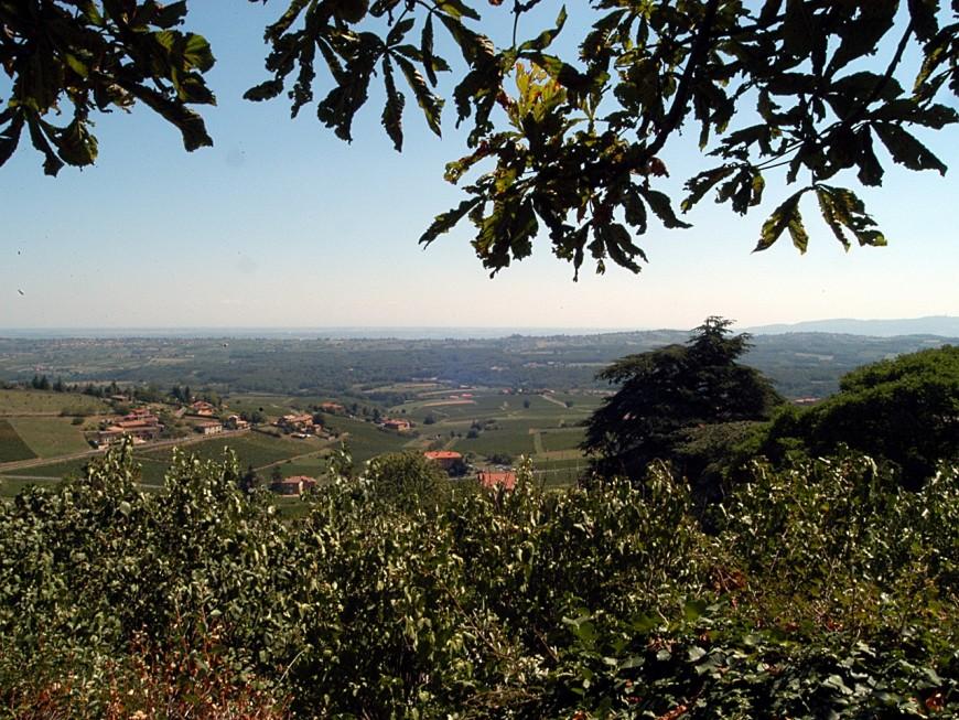 Rhône-Alpes parmi les régions les plus touchées par les pesticides