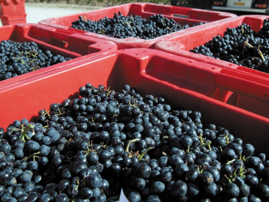 Beaujolais : le commercial en vin obtient un gros contrat en Chine mais garde l'argent pour lui
