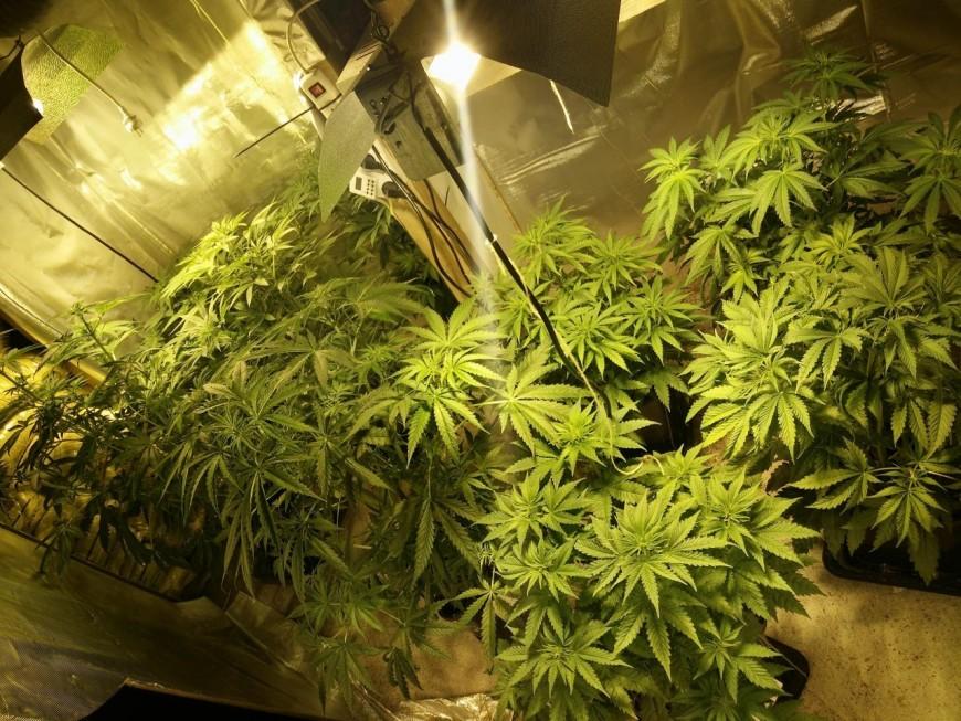 Givors : les policiers découvrent une plantation de cannabis, des explosifs et des armes