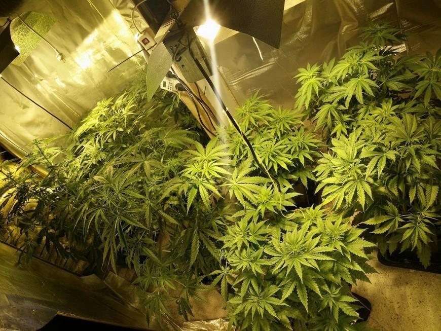 Auvergne Rhône-Alpes : 41,6% des jeunes de 17 ans ont déjà essayé le cannabis