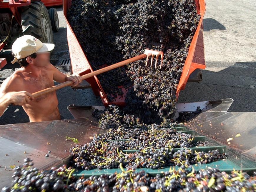 Justice : touché par la grêle, le viticulteur du Beaujolais voulait trafiquer ses crus