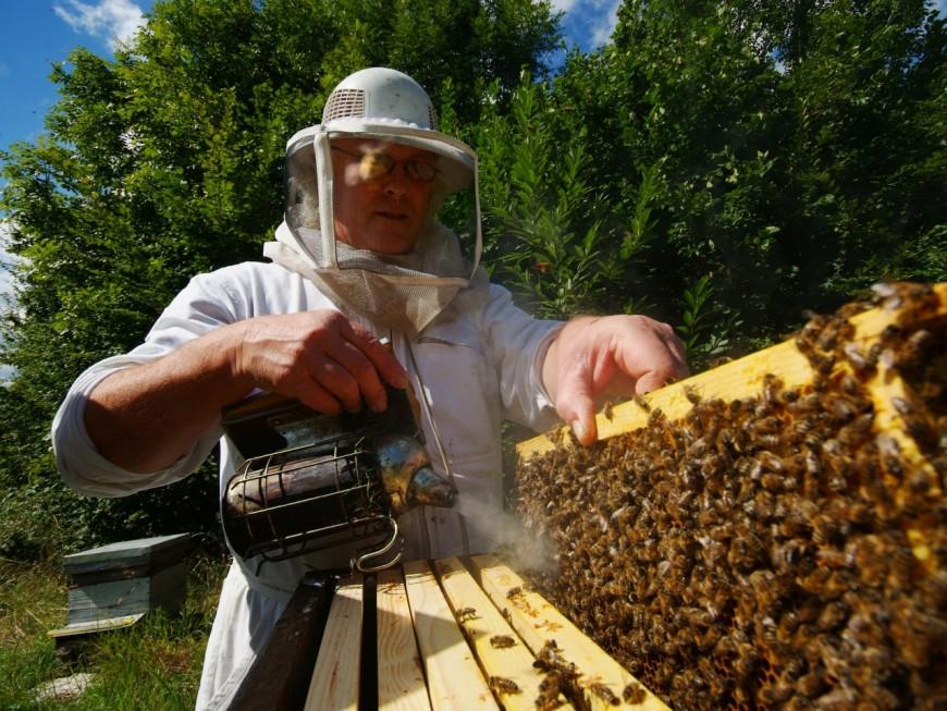 Les apiculteurs appellent à la mobilisation ce jeudi à Lyon pour lutter contre la mort des abeilles