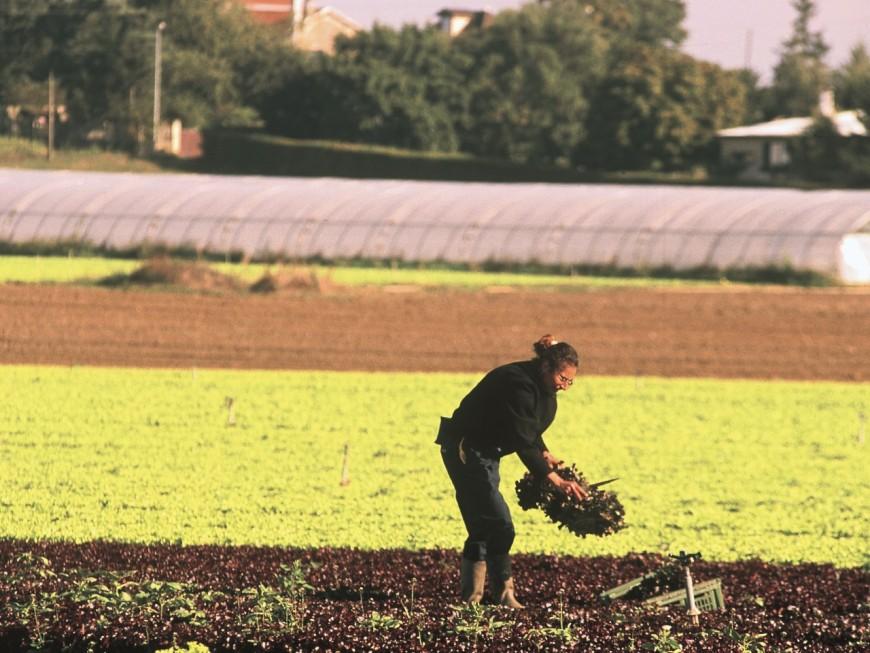 Auvergne-Rhône-Alpes: plus de 6000 agriculteurs attendent toujours des aides