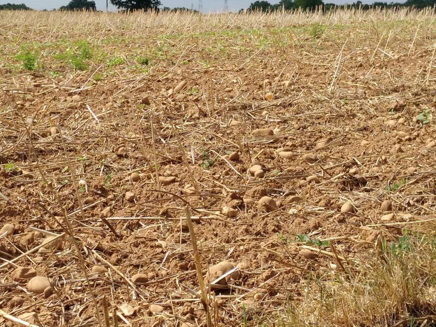 L'alerte sècheresse renforcée déclenchée dans le Rhône