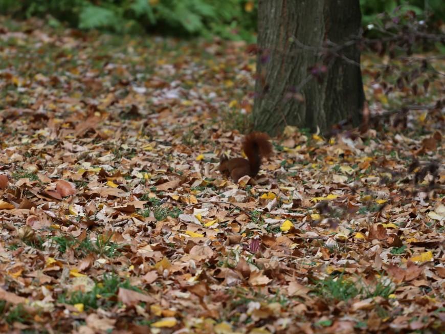 Il meurt écrasé par un arbre près de Lyon