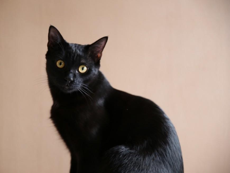 Sainte-Foy-lès-Lyon : ivre, elle jette le chat de son ex du 8e étage