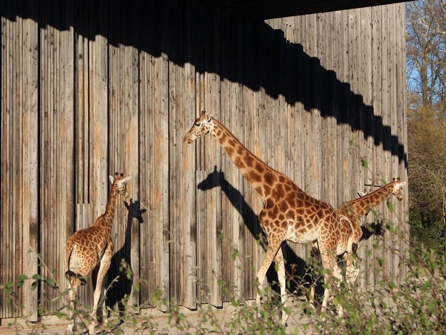 Zoo de Lyon : la Gauche Unie marque sa différence avec les écologistes - VIDEO