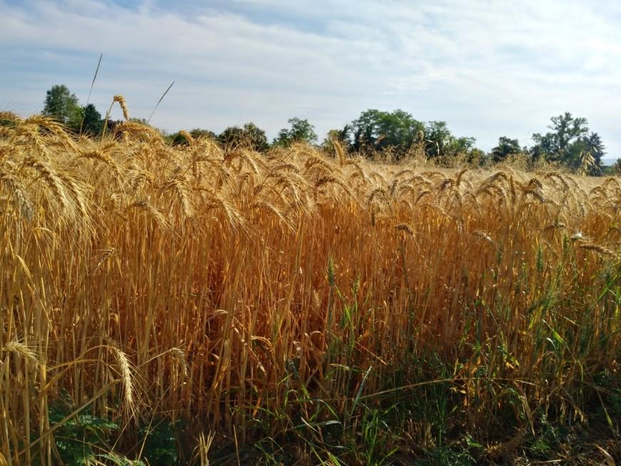 Confinement : la vente de semences et de plants potagers autorisée dans la région
