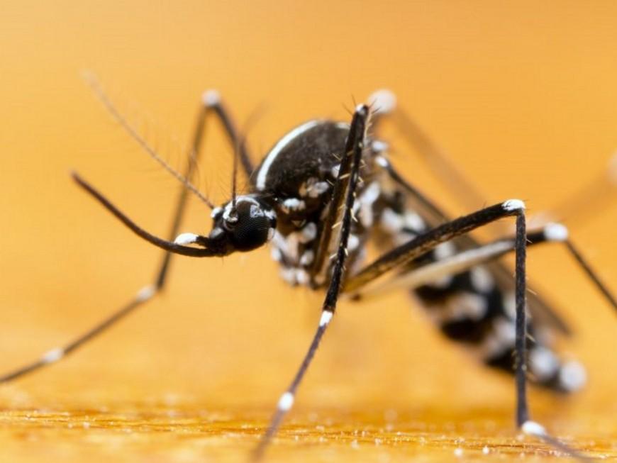 Cas de dengue près de Lyon : nouvelle opération de démoustication cette nuit