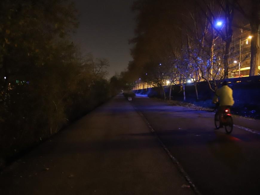 Lyon : l'éclairage public bientôt coupé la nuit pour le bien des animaux et des plantes ?