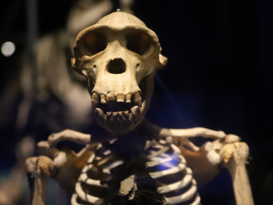 Musée des Confluences : une exposition sur l'utilisation de l'os à travers le temps - VIDEO