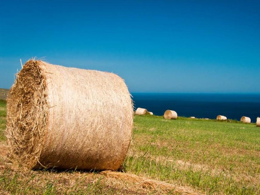 Fillette tuée par une meule de foin près de Lyon : du sursis pour l'agriculteur