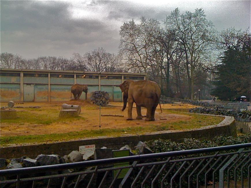 Lyon : rassemblement mercredi au parc de la Tête d'Or en soutien aux deux éléphants