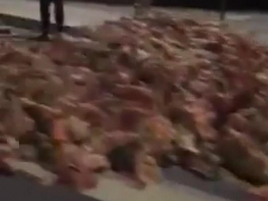 Lyon : le camion perd son chargement de viande et d'abats sur la route