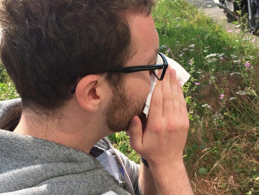La concentration en pollens de graminées à son maximum dans le Rhône !